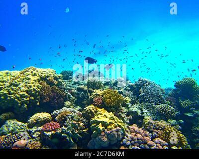 Une belle photo sous-marine de récifs de corail colorés avec une école de poissons nageant à proximité Banque D'Images
