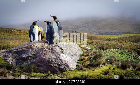 Quatre manchots étaient sur un rocher au soleil entouré de collines herbeuses sous des nuages bas