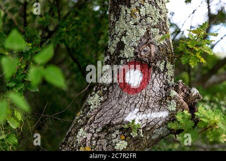 Marque de randonnée sur un arbre pointant vers le sentier correct Banque D'Images