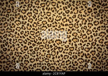 texture de fond de peau de léopard, design rétro en fourrure réelle, gros plan sauvage des cheveux animales modernes Banque D'Images