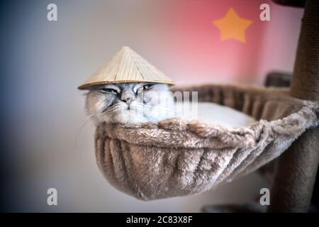 Chaton drôle dans un petit chapeau vietnamien couché sur la maison de chat