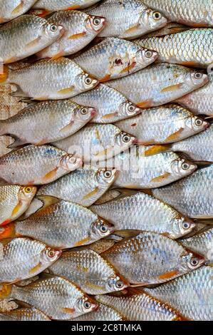 Vue latérale de poissons plats d'eau douce fraîchement pêchés avec des écailles irisées exposées pour la vente dans un marché de rue asiatique.