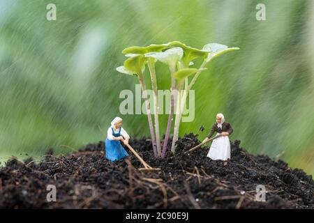 Gros plan de jardin miniature avec pousse de chou sur le sol et travaillant sous la pluie. Banque D'Images