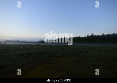 Ciel bleu clair de lune au-dessus d'un marais forestier dans le brouillard avant l'aube Banque D'Images