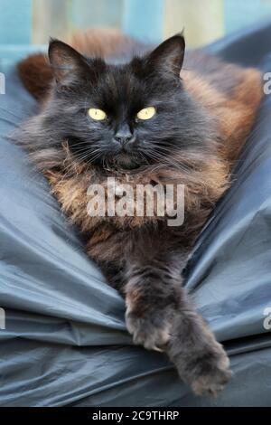 Gros plan d'un chat noir allongé sur un banc de balançoire de jardin.