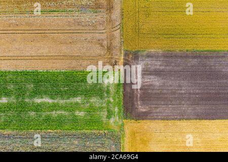 Vue aérienne par drone des champs naturels avec culture du canola, des céréales et du maïs Banque D'Images