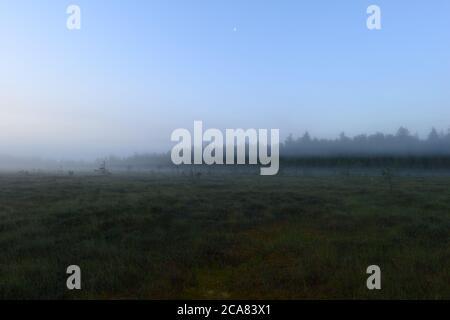 La forêt brumeuse s'embue dans le silence avant l'aube de l'été Banque D'Images