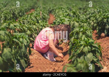 Une petite fille qui s'amuse à la ferme au poivre en été Banque D'Images