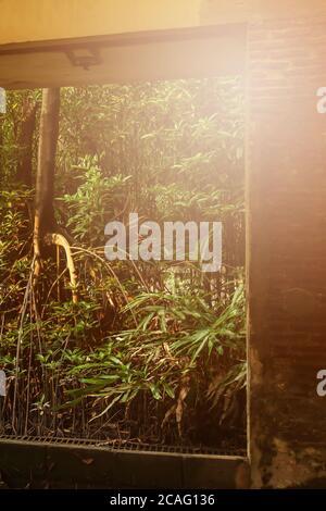 Un intérieur abandonné de l'ancien fort, vue de l'intérieur donnant sur l'extérieur, sunbeam brille à travers la jeune forêt verte et la fenêtre ruinée dans un vieux Wal de brique