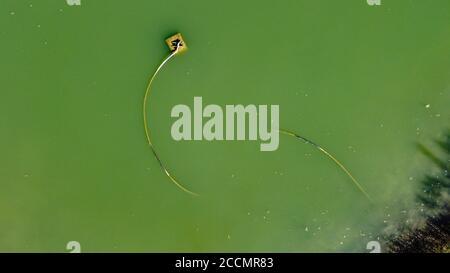 zénith vue aérienne d'un serpent-comme tube à l'intérieur d'un petit lac de montagne Banque D'Images