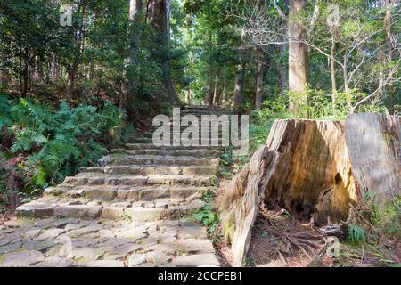 Wakayama, Japon - pente de Daimonzaka sur Kumano Kodo (route de Nakahechi) à Nachikatsuura, Wakayama, Japon. Il fait partie du site du patrimoine mondial de l'UNESCO.