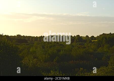 Forêt avec le château de Windsor à la distance du Dorney Zones humides Banque D'Images