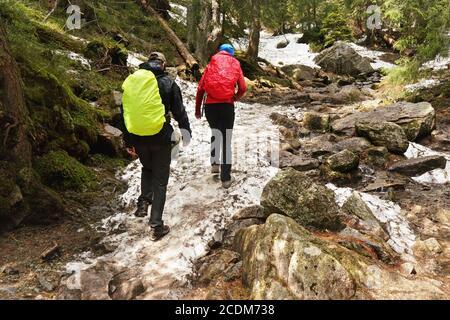 Deux randonneurs portant une veste recouverte de imperméable, marchant dans la forêt, pierres couvertes de neige et racines au sol, arbres en arrière-plan, vue de derrière Banque D'Images