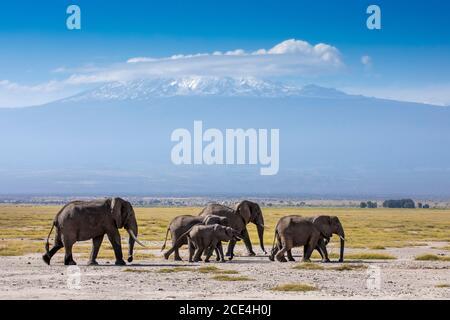 Famille d'éléphants avec le mont Kilimanjaro en arrière-plan dans Parc national d'Amboseli au Kenya