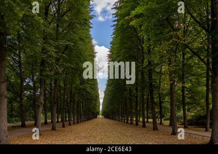 Une belle allée sans fin de grands arbres mène à horizon