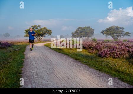 Floraison de bruyère aux pays-Bas, Sunny foggy lever du soleil sur les collines roses pourpres au parc Westerheid pays-Bas, floraison des champs Heather dans le