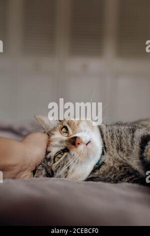 Main de la personne anonyme qui a fait un joli chat sur le lit chambre confortable