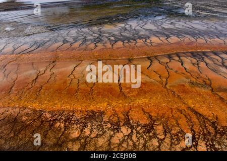 Tapis de bactéries étranges et colorées au bassin de Geyser Midway, parc national de Yellowstone. Midway Geyser Basin a également beaucoup de belles piscines, et des sources.