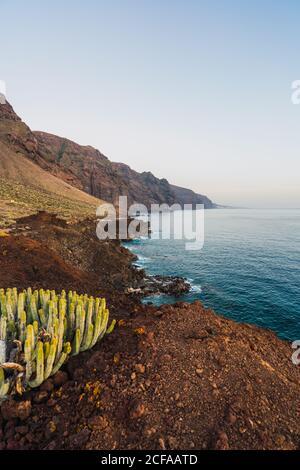 Gros plan cactus sauvages en fleurs poussant près de la mer à Ténérife, îles Canaries, Espagne
