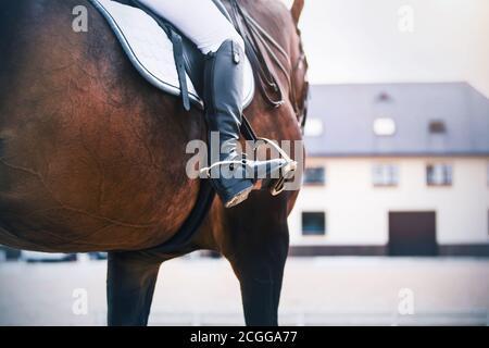 Sur fond de l'écurie, un pilote en bottes noires avec des éperons fait un cheval de course Bay Sports. Étrier. Équipement de sports équestres.
