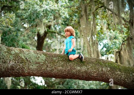 Un petit garçon a grimpé sur l'arbre et s'est assis sur la branche de l'arbre.