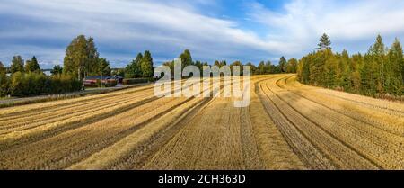 Panorama aérien de drone vient de récolter de petits champs de blé, les cultures ont été récemment rassemblées. Forêt de pins sur la droite, chalets d'été en bois rouge et hou
