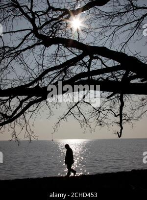 A man walks under a tree on the shore of Lake Leman on a sunny winter afternoon in St-Sulpice near Lausanne February 18, 2011.  REUTERS/Denis Balibouse (SWITZERLAND - Tags: ENVIRONMENT)