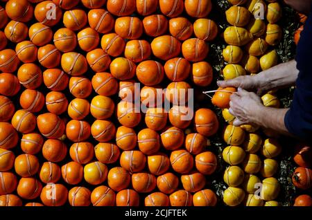 A worker puts the final touches to a pattern made with lemons and oranges during the preparations of the 82th Lemon festival in Menton February 12, 2015.  Over 20,000 hours work for teams to set up the festival and some 145 metric tons of lemons and oranges are used to make displays during the 82th festival, which is themed 'Tribulations of a lemon in China', and runs from February 14 through March 4.  REUTERS/Eric Gaillard (FRANCE  - Tags: SOCIETY TRAVEL)