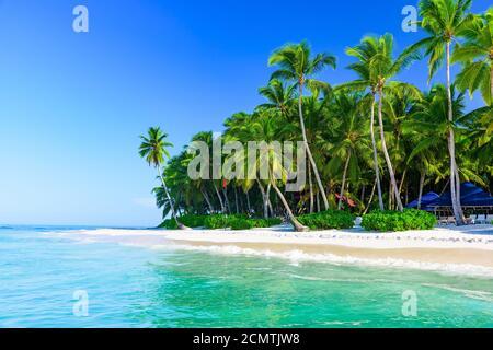 magnifique paysage des caraïbes avec palmier sur la plage