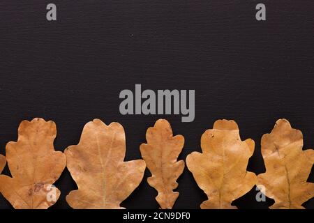 Arrière-plan de l'automne. Sécher les feuilles de chêne sur la table noire. Vue de dessus. Pose à plat.