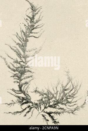 . La mer-plage à marée basse : un guide pour l'étude de l'algue et de la vie animale inférieure trouvée entre les tidemarks .