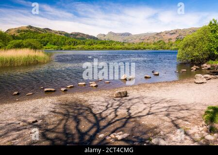 Elter Water Lake, Elterwater, Lake District, Cumbria, Angleterre, Royaume-Uni, Europe Banque D'Images