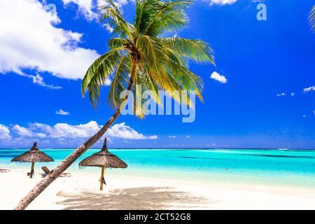 Le paysage de plage tropical est parfait. Palmiers sur mer turquoise et sable blanc
