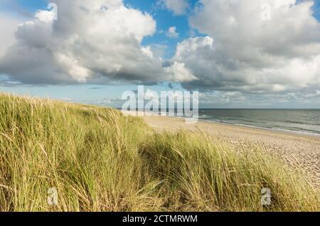 Plage avec dunes de sable et herbe de marram, ciel bleu et nuages dans la douce lumière du coucher du soleil. Hvidbjerg Strand, Blavand, Mer du Nord, Danemark.