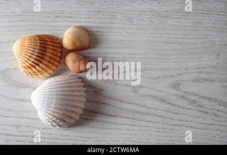 coques de mer sur une surface de bois de style blanchi au soleil, norfolk, angleterre Banque D'Images