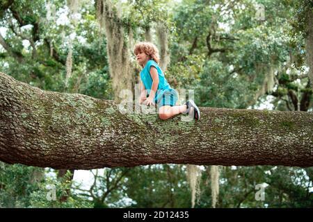Enfants grimpant des arbres. Portrait d'un enfant garçon mignon assis sur le grand vieux arbre le jour ensoleillé.
