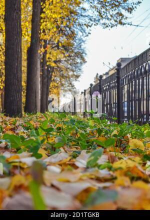Feuillage sec tombé sur le chemin asphalté du parc d'automne. Vue en angle bas, mise au point sélective.