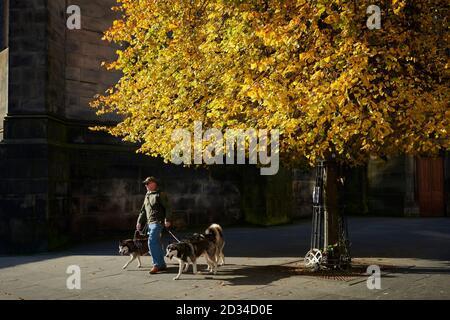 Edinburgh Scotland, Royaume-Uni octobre 07 2020 ; MÉTÉO : Royaume-Uni UN homme avec des chiens marche sous un arbre de couleur automnale sur le Royal Mile. Credit steven scott taylor / alamy Live News