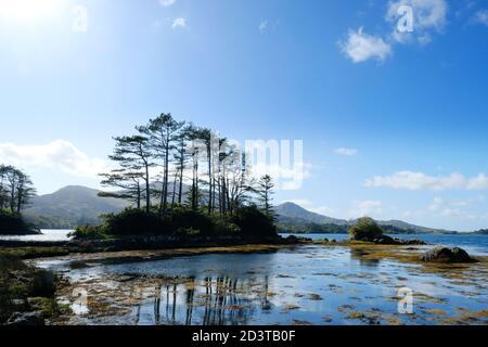 La côte sur la rivière Kenmare, comté de Kerry, Irlande - John Gollop