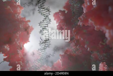 Le monde à l'intérieur d'une cellule humaine. Des chaînes d'ADN, des nucléotides (formant des paires de bases dans l'ADN) et des protéines à l'intérieur du noyau d'une cellule eucaryote.
