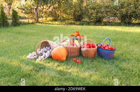 les légumes colorés et brillants dans les paniers se tiennent sur l'herbe