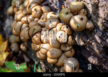 Les champignons sauvages poussent le long d'un sentier dans les montagnes pendant les mois d'automne dans le nord de l'État de New York.