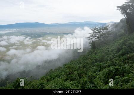La zone de conservation de Ngorongoro, est une zone protégée et un site du patrimoine mondial situé à 180 km (110 mi) à l'ouest d'Arusha dans la région des montagnes Crater de Tan