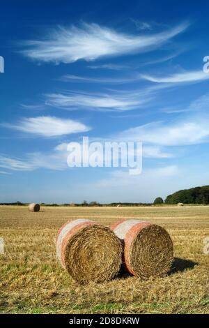 Royaume-Uni, Yorkshire du Sud, Barnsley, balles de foin de fût dans le champ près de Silkstone Common