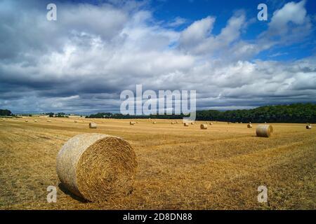 Royaume-Uni, Yorkshire du Sud, Doncaster, balles de foin de fût dans le champ près de Clayton