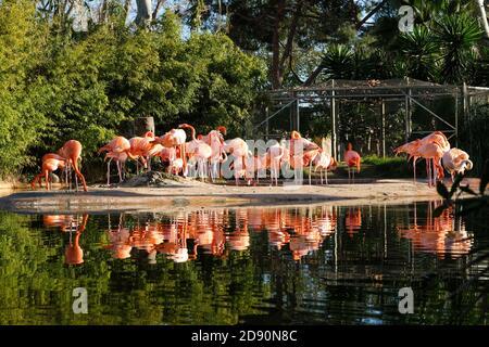 Lac avec de beaux flamants roses entouré de plantes luxuriantes par une journée ensoleillée à Barcelone, Espagne.