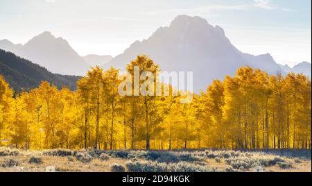 Quaking Aspens, Autumn Colors, Mt Moran, Grand Tetons NP, WY, USA, par Dominique Braud/Dembinsky photo Assoc
