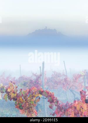 Pastel matin brouillard paysage Motovun en Istrie Croatie Europe Rouge L'automne laisse le vignoble en premier plan et l'ancienne ville sur le sommet de la colline en saillie par