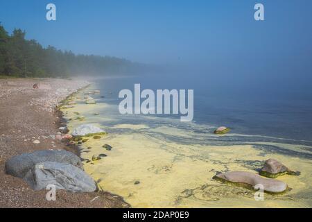 Les algues fleurissent le long du rivage d'un étang.