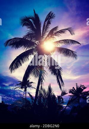 Effet Retro Vintage style Hippie de l'image filtrée contre palm sur sunset sky